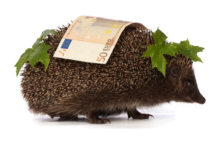 hastens: The hedgehog in motion hastens home from the bank carrying percent fifty euro profit