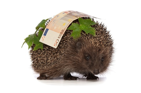 The hedgehog in motion hastens home from the bank carrying percent fifty euro profit