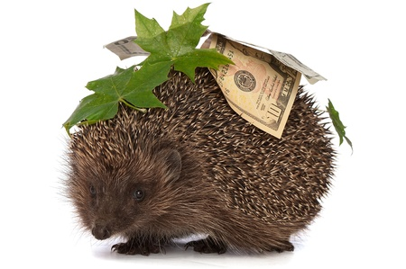 The hedgehog in motion hastens home from the bank carrying percent twenty dollars profit Stock Photo