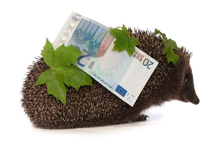 hastens: The hedgehog in motion hastens home from the bank carrying percent twenty euro profit Stock Photo