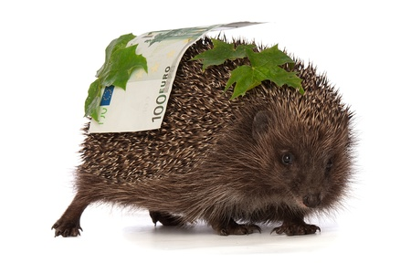 The hedgehog in motion hastens home from the bank carrying percent houndred euro profit Stock Photo