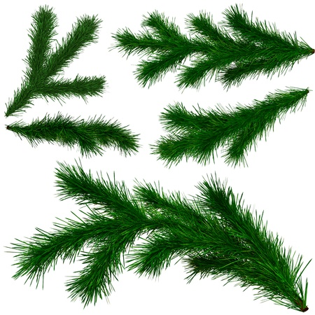 set of Christmas tree fir branches on white background photo