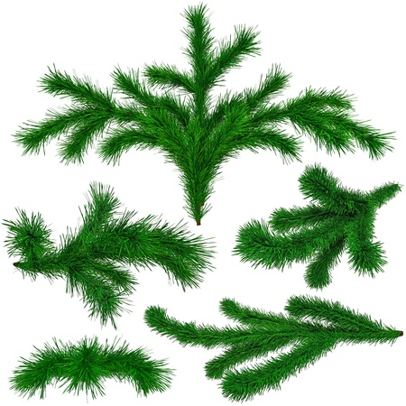 set of Christmas green fir-tree branches on white background photo