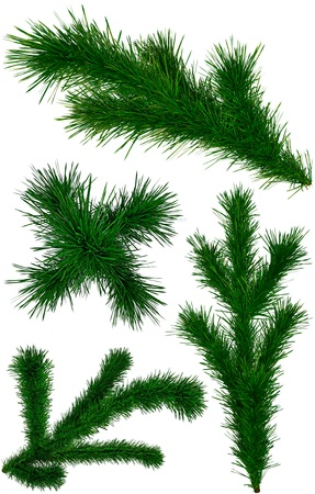 set of green Christmas fir-tree branches on white background photo