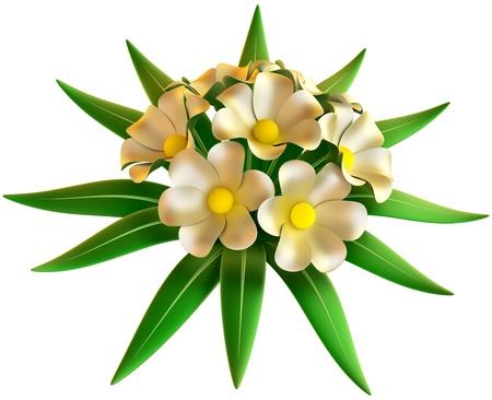 wedding bouquet of white flowers on white background Stock Photo - 17843460