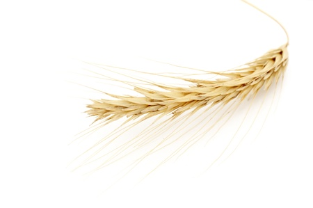bunch of golden wheat isolated on white background Stock Photo