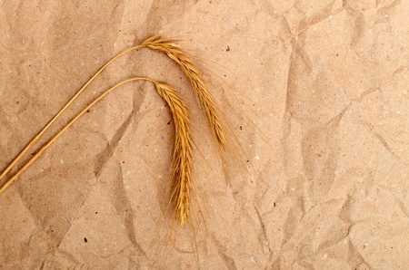 Wheat ears on vintage old paper background Stock Photo - 10351921