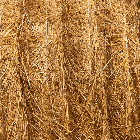 Close up of ground. Texture of straw. photo