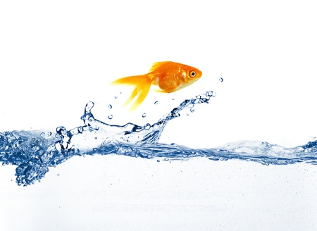 fish water: gold fish jumping over slash blue water
