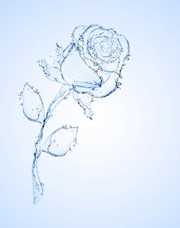 lirio de agua: flor hecha de agua ver m�s en mi p�gina