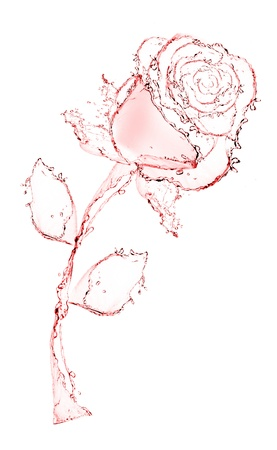 flower made of water  rose  see more on my page Stock Photo