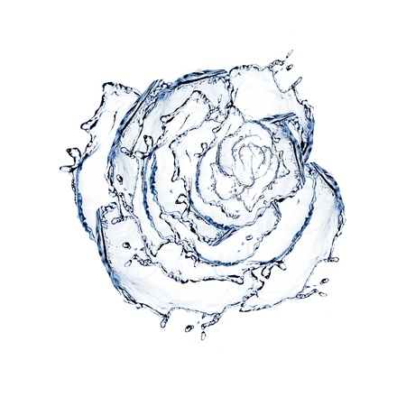 flower made of water  rose isolated on a white background photo