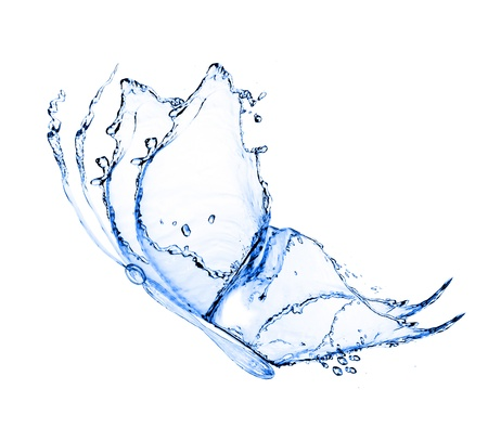 water butterfly isolated on a white background photo