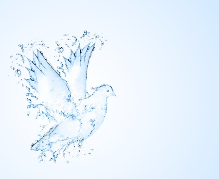 made of water: dove made out of water splashes isolated