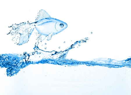 water fish jumping over slash blue water