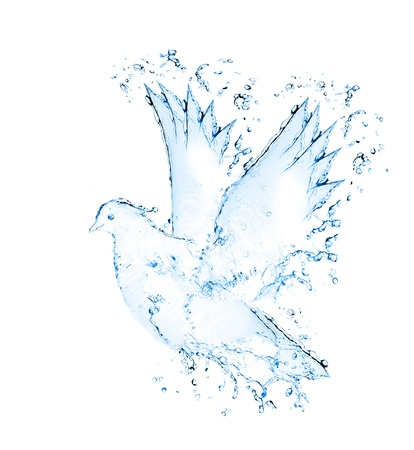 made of water: dove made out of water splashes isolated on white