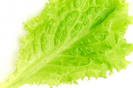 leaf fresh lettuce isolated on white background photo