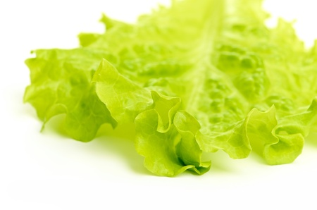 leaf fresh lettuce isolated on a white photo
