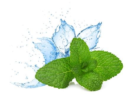 ミントの葉の水のしぶき
