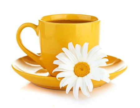 fresh camomile flowers and camomile herbal tea photo