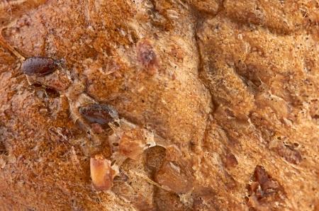 porous: background texture of a porous brown bread Stock Photo