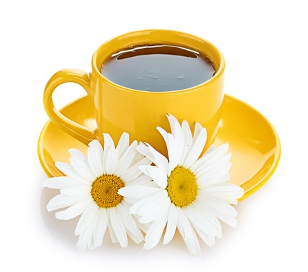 fresh tea camomile flowers photo
