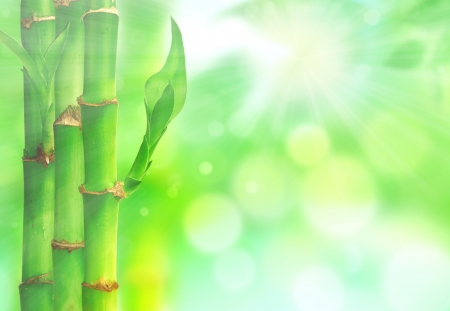 color therapy: Natural zen backgrounds with bamboo leaves