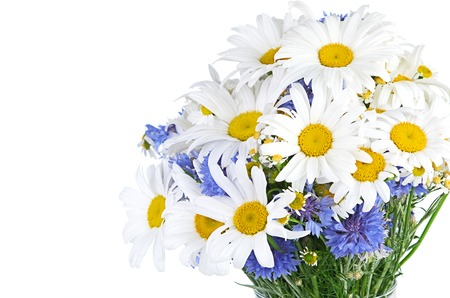 white daisy: beautiful bouquet of daisies in vase Stock Photo