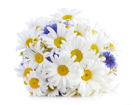 marguerite: beau bouquet de marguerites dans le vase