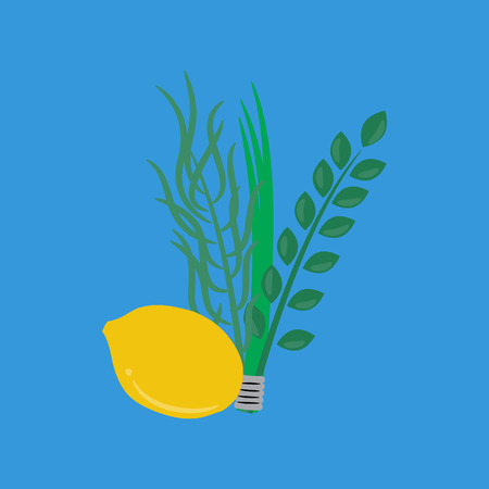 jews: Etrog, lulav hadas and arava for Sukkot festival.