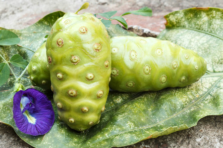 noni fruit: Noni fruit with butterfly pea.