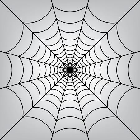 spider web: Spider web.