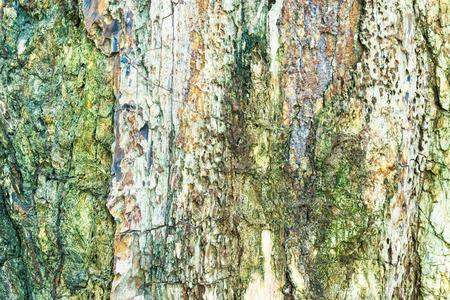 petrified fossil: Petrified wood background. Stock Photo
