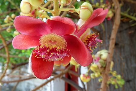 Sal flowers. Stock Photo