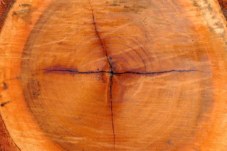 Close up Core Tree of Cut Tree Trunk Background. Stock Photo