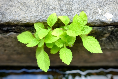 Green Plant Growing in Drain.