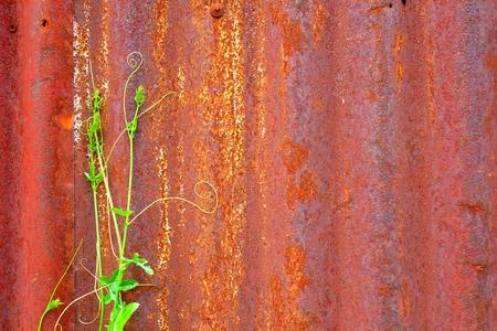 Saplings on Old Zinc Wall Background.