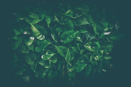 Leaves Background in Dark Contrasts with Vintage Style.