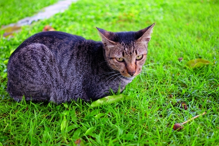 Cat Laying Down in Garden.