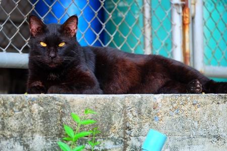 Black Cat Lying on Ground. Stock Photo