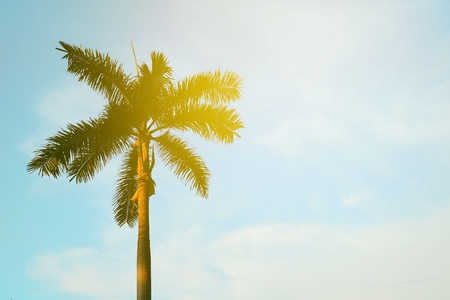 Palm Tree with Blue Sky and Light Leak Background.