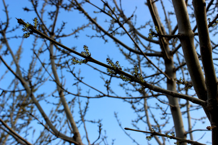 the silence of the world: growing tree in spring