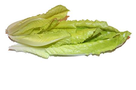 romaine: Romaine Fresh lettuce Stock Photo