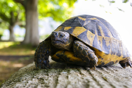 nice turtle, tortoise which is the guest of our picnic Stock Photo