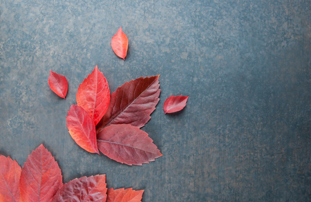 Autumn red leaves frame on black rustic vintage backdrop, autumn bright concept