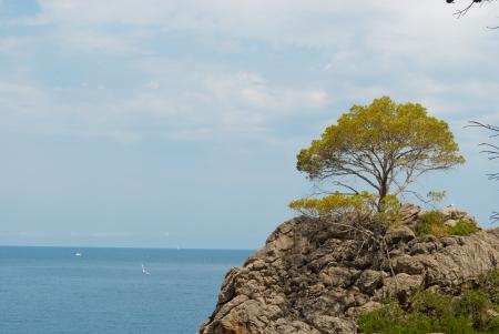 paisaje mediterraneo: Paisaje mediterr�neo en Mallorca