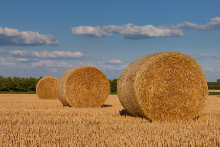 Straw bales on a sunny day in summer Stock Photo