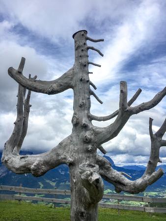 Bare tree trunk on top of a mountain in Scheffau, Austria