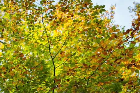 Low angle view of blurred turning leaves in a forest in autumn Stok Fotoğraf
