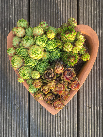 Succulents in a planting pot in the shape of a heart on a wooden terrace